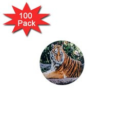 Animal Big Cat Safari Tiger 1  Mini Magnets (100 Pack)
