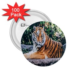 Animal Big Cat Safari Tiger 2 25  Buttons (100 Pack)