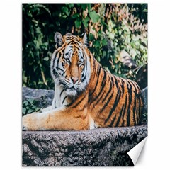 Animal Big Cat Safari Tiger Canvas 18  X 24