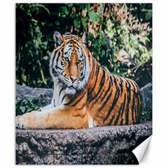 Animal Big Cat Safari Tiger Canvas 20  X 24