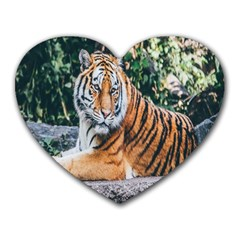 Animal Big Cat Safari Tiger Heart Mousepads