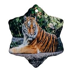 Animal Big Cat Safari Tiger Ornament (snowflake)