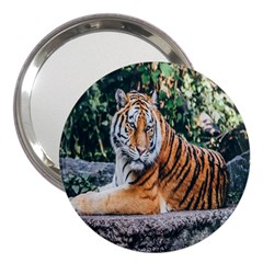 Animal Big Cat Safari Tiger 3  Handbag Mirrors