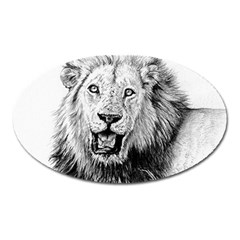 Lion Wildlife Art And Illustration Pencil Oval Magnet
