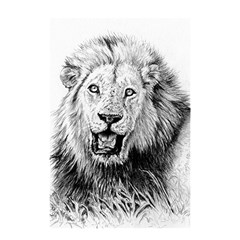 Lion Wildlife Art And Illustration Pencil Shower Curtain 48  X 72  (small)