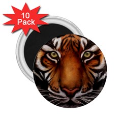 The Tiger Face 2 25  Magnets (10 Pack)