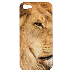 Big Lion Looking Far Away Apple Iphone 5 Hardshell Case