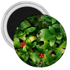 Christmas Season Floral Green Red Skimmia Flower 3  Magnets