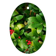 Christmas Season Floral Green Red Skimmia Flower Ornament (oval)