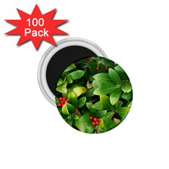 Christmas Season Floral Green Red Skimmia Flower 1 75  Magnets (100 Pack)