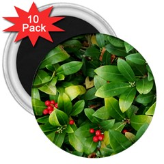 Christmas Season Floral Green Red Skimmia Flower 3  Magnets (10 Pack)