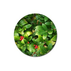 Christmas Season Floral Green Red Skimmia Flower Magnet 3  (round)