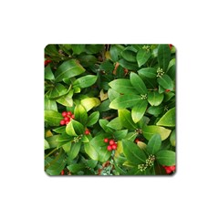 Christmas Season Floral Green Red Skimmia Flower Square Magnet