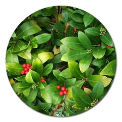Christmas Season Floral Green Red Skimmia Flower Magnet 5  (round)