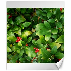 Christmas Season Floral Green Red Skimmia Flower Canvas 8  X 10