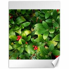 Christmas Season Floral Green Red Skimmia Flower Canvas 12  X 16