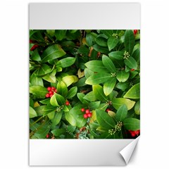 Christmas Season Floral Green Red Skimmia Flower Canvas 12  X 18