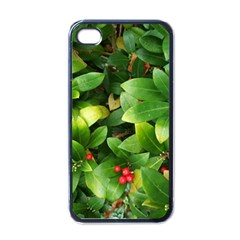 Christmas Season Floral Green Red Skimmia Flower Apple Iphone 4 Case (black)