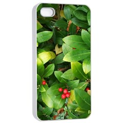Christmas Season Floral Green Red Skimmia Flower Apple Iphone 4/4s Seamless Case (white)