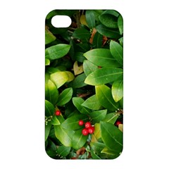 Christmas Season Floral Green Red Skimmia Flower Apple Iphone 4/4s Hardshell Case