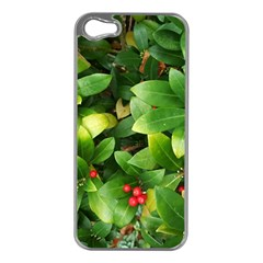 Christmas Season Floral Green Red Skimmia Flower Apple Iphone 5 Case (silver)