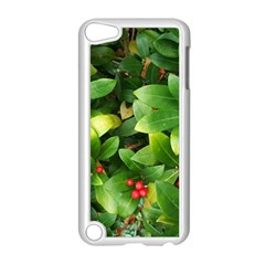 Christmas Season Floral Green Red Skimmia Flower Apple Ipod Touch 5 Case (white)