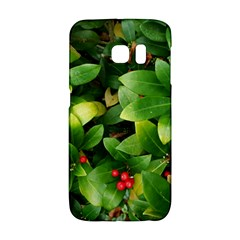 Christmas Season Floral Green Red Skimmia Flower Galaxy S6 Edge
