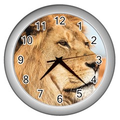 Big Male Lion Looking Right Wall Clocks (silver)