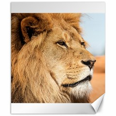 Big Male Lion Looking Right Canvas 8  X 10