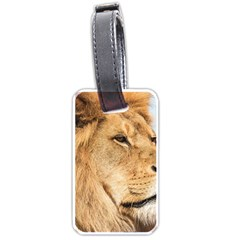 Big Male Lion Looking Right Luggage Tags (one Side)