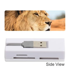 Big Male Lion Looking Right Memory Card Reader (stick)