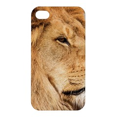 Big Male Lion Looking Right Apple Iphone 4/4s Hardshell Case