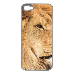 Big Male Lion Looking Right Apple Iphone 5 Case (silver)