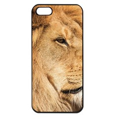 Big Male Lion Looking Right Apple Iphone 5 Seamless Case (black)