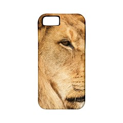 Big Male Lion Looking Right Apple Iphone 5 Classic Hardshell Case (pc+silicone)