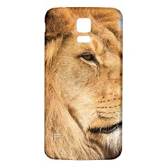 Big Male Lion Looking Right Samsung Galaxy S5 Back Case (white)