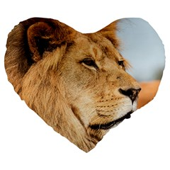 Big Male Lion Looking Right Large 19  Premium Flano Heart Shape Cushions