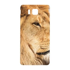 Big Male Lion Looking Right Samsung Galaxy Alpha Hardshell Back Case