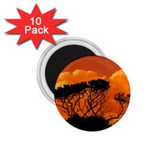 Trees Branches Sunset Sky Clouds 1 75  Magnets (10 Pack)