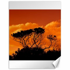 Trees Branches Sunset Sky Clouds Canvas 12  X 16