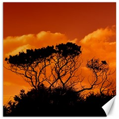 Trees Branches Sunset Sky Clouds Canvas 20  X 20