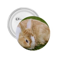 Beautiful Blue Eyed Bunny On Green Grass 2 25  Buttons