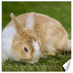 Beautiful Blue Eyed Bunny On Green Grass Canvas 12  X 12