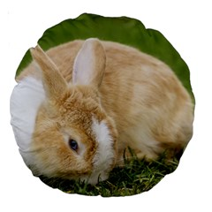 Beautiful Blue Eyed Bunny On Green Grass Large 18  Premium Round Cushions