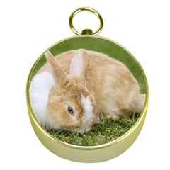 Beautiful Blue Eyed Bunny On Green Grass Gold Compasses