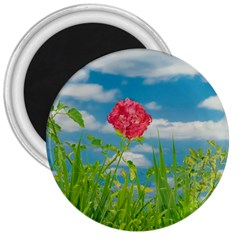 Beauty Nature Scene Photo 3  Magnets