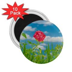Beauty Nature Scene Photo 2 25  Magnets (10 Pack)