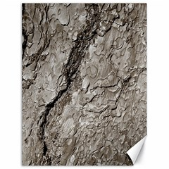 Tree Bark A Canvas 18  X 24