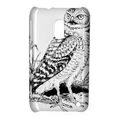 Animal Bird Forest Nature Owl Nokia Lumia 620
