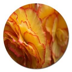 Flowers Leaves Leaf Floral Summer Magnet 5  (round)